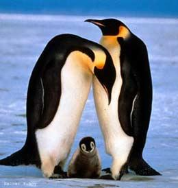 homework help with emperor penguin